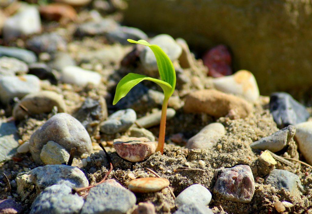 plant-4108210_1920